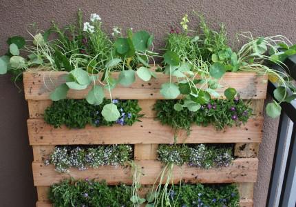 Jardín de hierbas de paletas de bricolaje